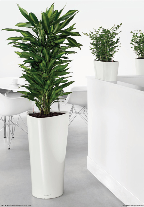 The Urban Garden Auckland S Indoor Plant Hire Specialists