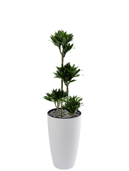 The urban garden auckland s indoor plant hire specialists Best small office plants