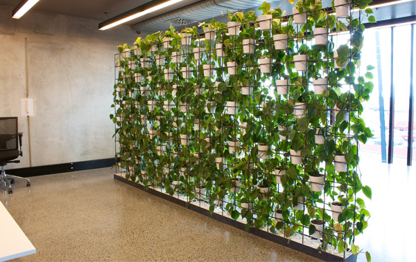 The urban garden auckland s indoor plant hire specialists for Living plant walls