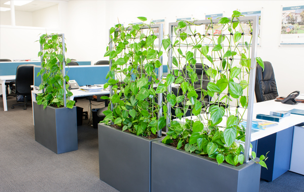 the urban garden  auckland u2019s indoor plant hire specialists  u2013 plant walls for your office
