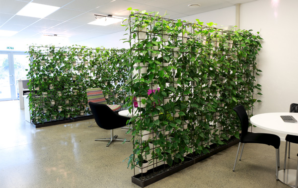 The Urban Garden Auckland S Indoor Plant Hire Specialists