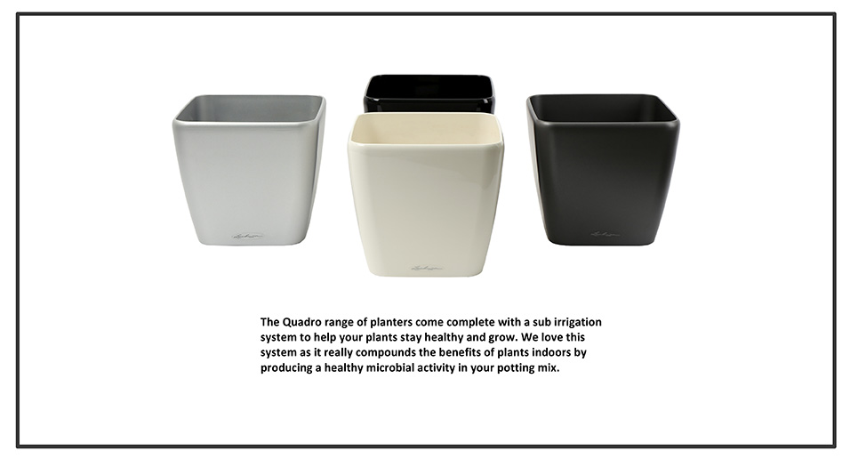 garden eden planters with Containers on Best Cactus To Plant In Garden 4059807 in addition 205311303 besides Index further Guest Post Driving Off With Recycled Tires as well Product Info Seeds.